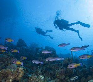 Starfish Tobago